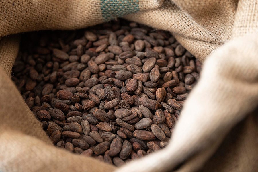 原材料はカカオ豆とサトウキビだけ。タイムレスチョコレートができるまでのアイキャッチ画像